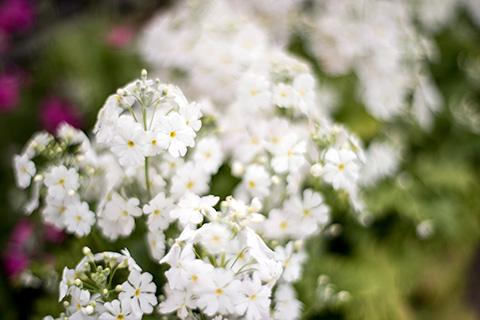 近所の花21