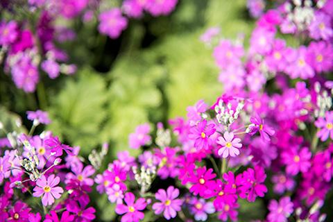 近所の花25