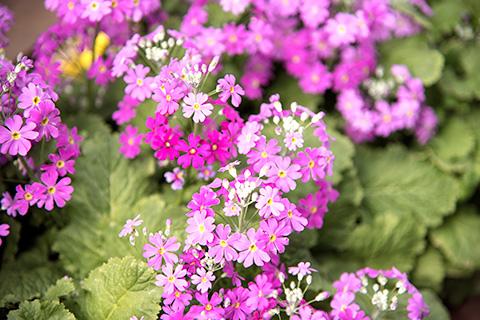 近所の花26