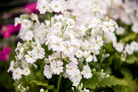 近所の花27