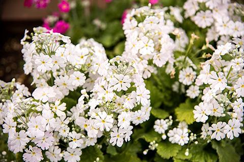 近所の花28