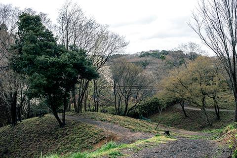 さくらの山公園04