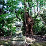 玉崎神社10
