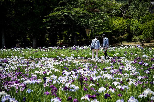 袖ケ浦公園18