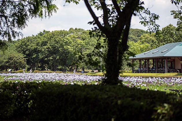 袖ケ浦公園34