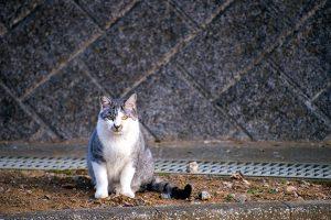 袖ヶ浦公園で望遠25