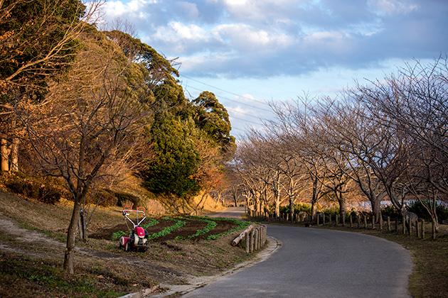 袖ヶ浦公園で望遠48