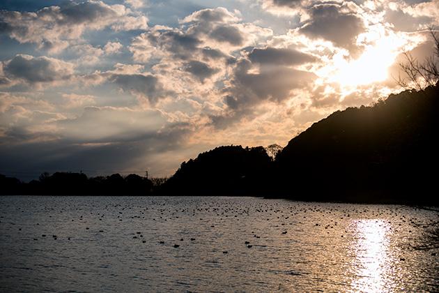 袖ヶ浦公園で望遠52