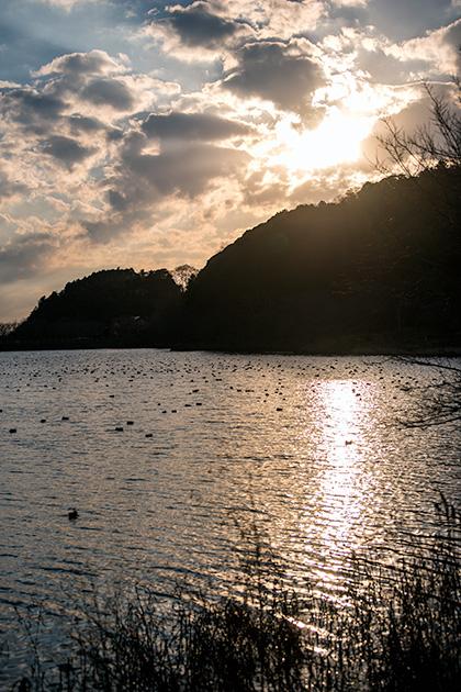 袖ヶ浦公園で望遠53