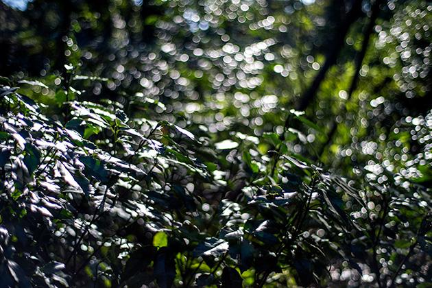 新宿〜代々木〜明治神宮24