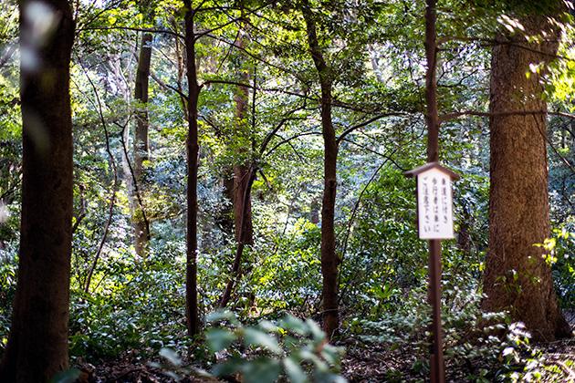 新宿〜代々木〜明治神宮25