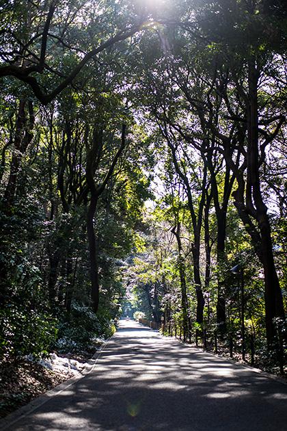 新宿〜代々木〜明治神宮26