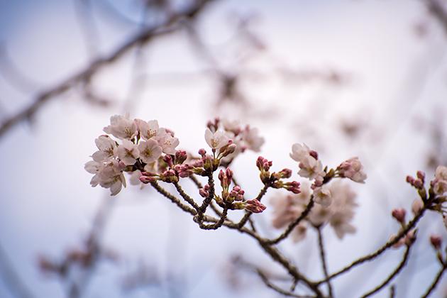 山滝野春の花02