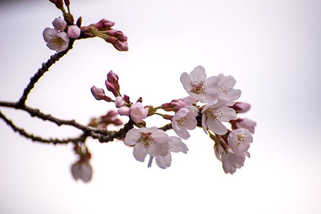 山滝野春の花03