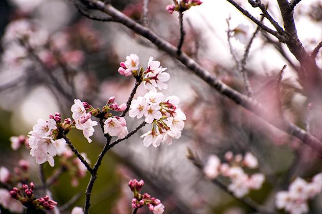 山滝野春の花05