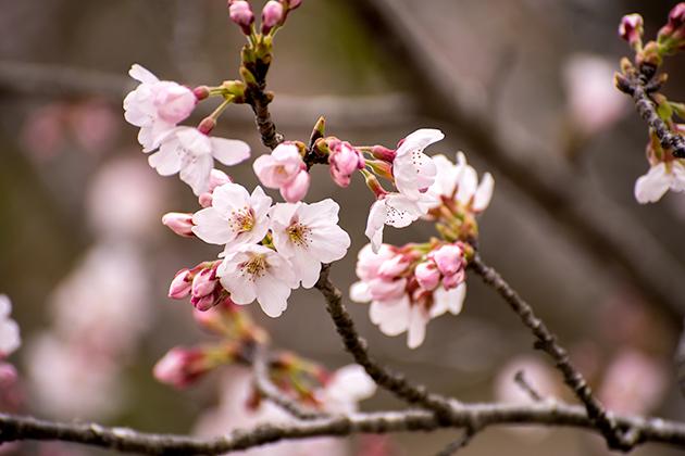 山滝野春の花07