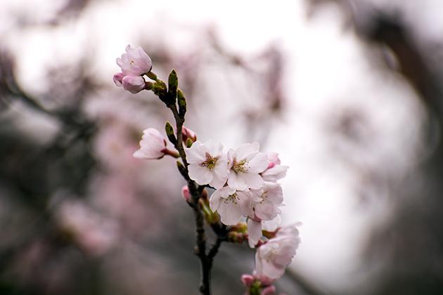 山滝野春の花08