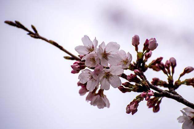 山滝野春の花10