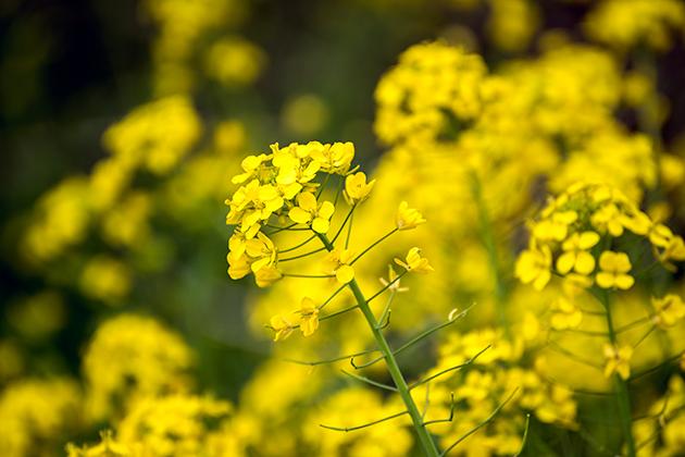 山滝野春の花13
