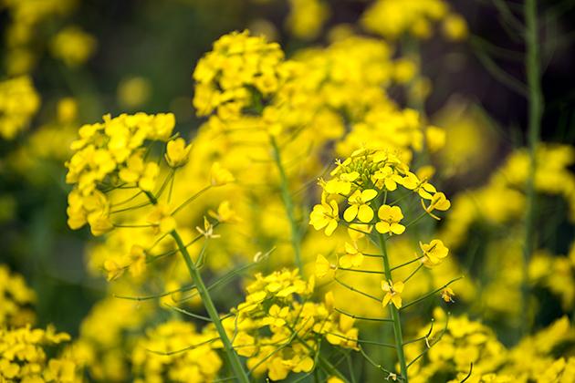 山滝野春の花14