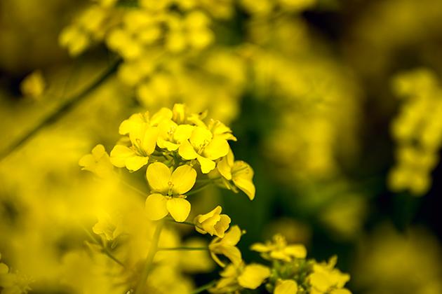 山滝野春の花17
