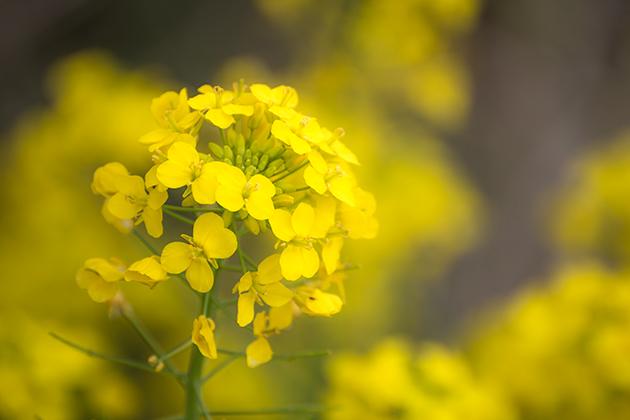 山滝野春の花18