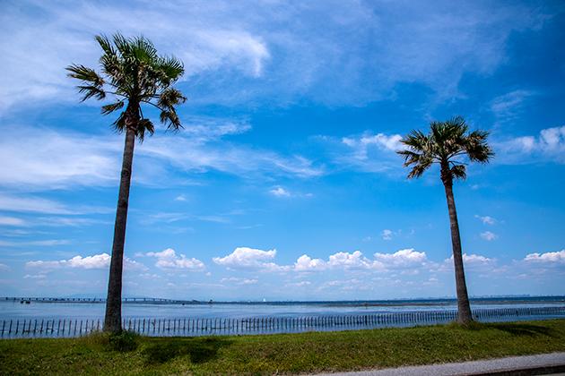 袖ケ浦海浜公園14