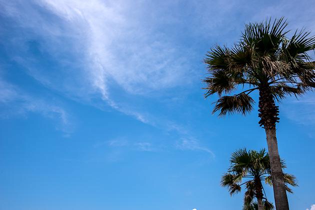 袖ケ浦海浜公園22