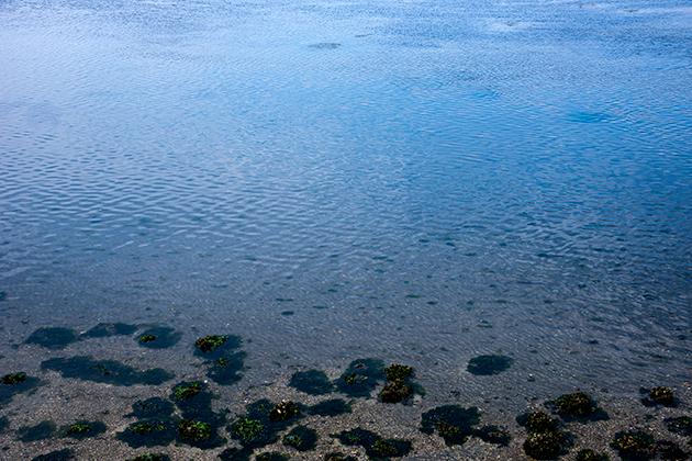 袖ケ浦海浜公園23