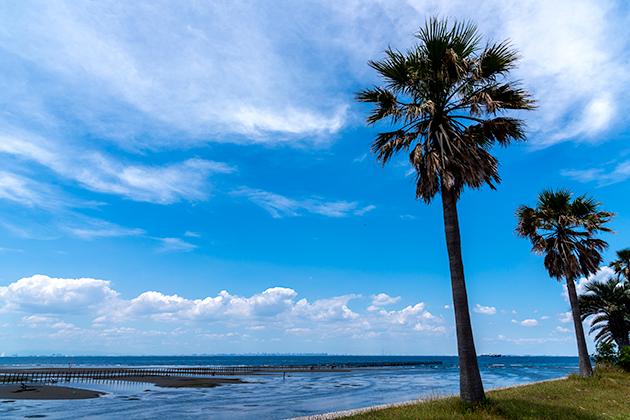 袖ケ浦海浜公園25