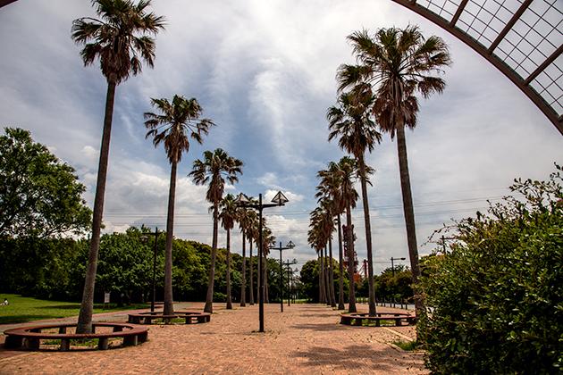 袖ケ浦海浜公園32