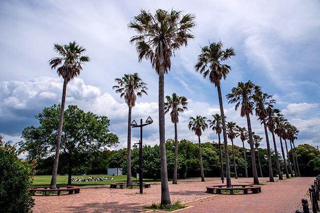 袖ケ浦海浜公園33