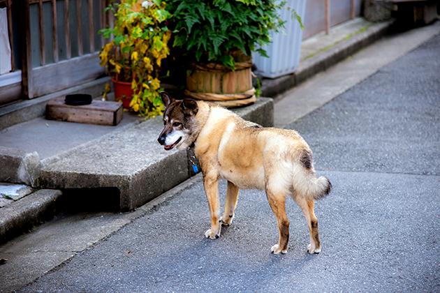 飯田橋〜東京大神宮05