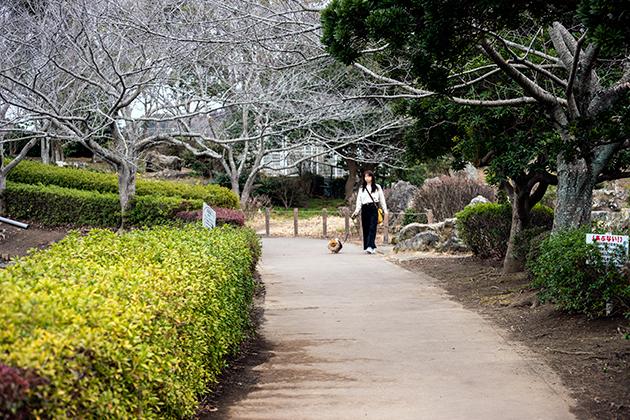 袖ケ浦公園11