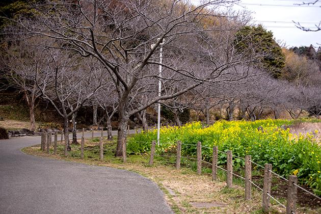 袖ケ浦公園25