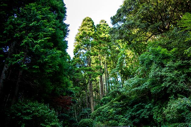 大原小浜八幡神社07