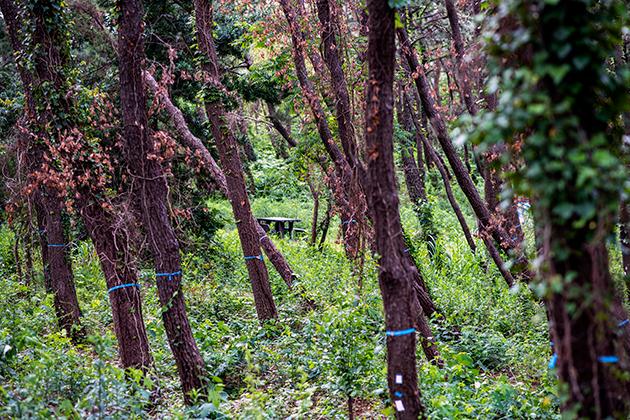 富津公園09
