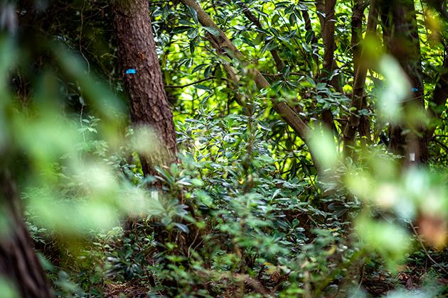 富津公園47